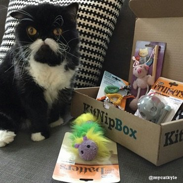 Cat trying to choose which fun KitNipBox handmade toy to play with first