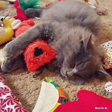 Soo many toys to choose from! Happy cat!