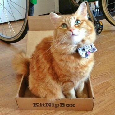 Meow! I'm in the box! Did you see the cat hygiene products that were inside?