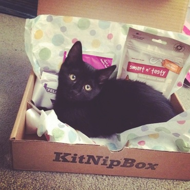 Cat mommy! Can I go in the KitNipBox with my cat bow tie?
