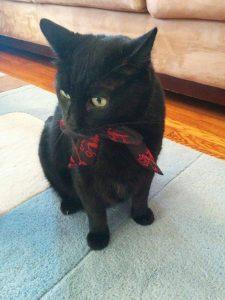 Black Cats: Sylvester  who belongs to Jordan Salvit
