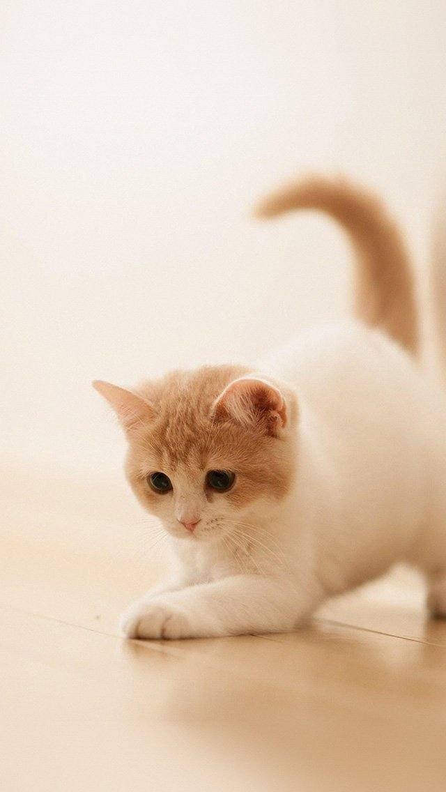 Cats Love Wallpaper For Mobile