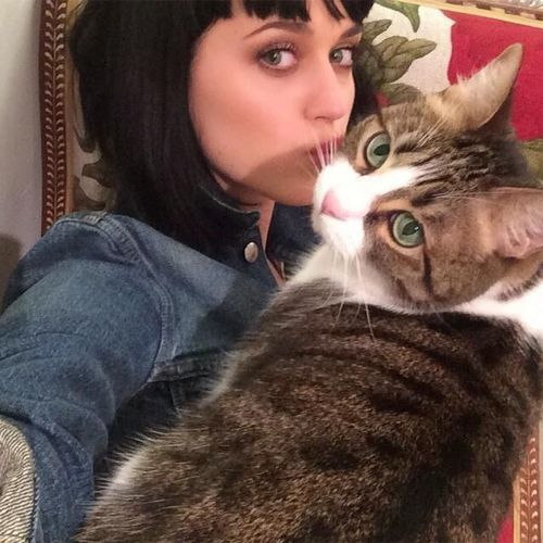 Cat Ladies: Katy Perry with her cat Kitty Purry