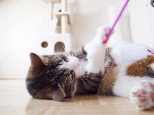 Kitty Playing with String