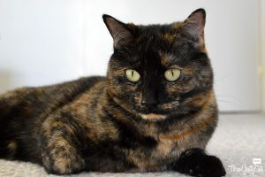 Fostering Cats: Three Chatty Cats - Olive