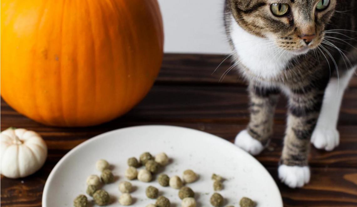 pumpkin-kitty-treat