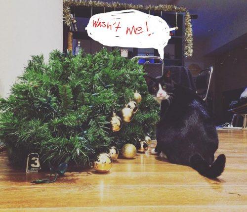 Catmas tree down