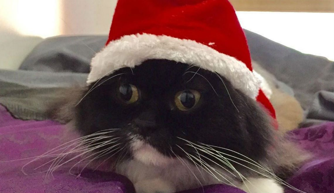 8 Reasons to Seriously Fall in LOVE with Catmas