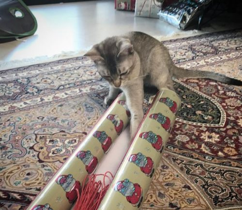 Catmas wrapping problems