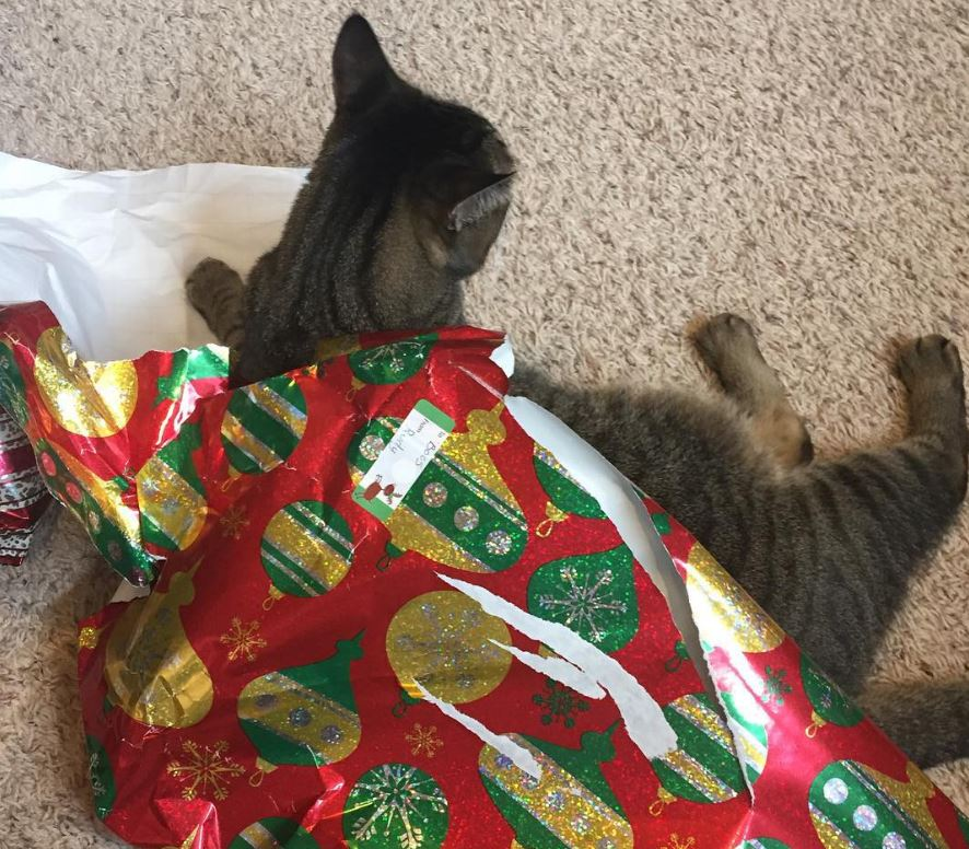 Catmas wrapping problems 2