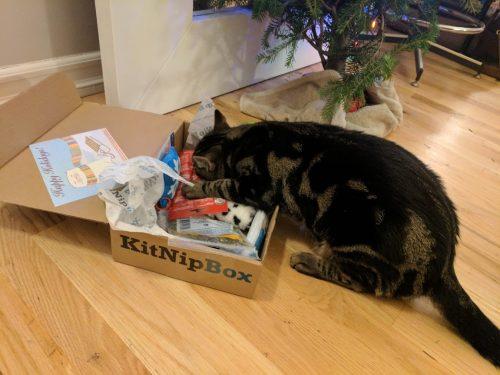 """No more pics. I've been a good kitty..."" Onion (via Katie B.)"