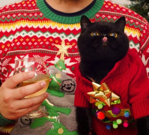 Catmas sweater kitty