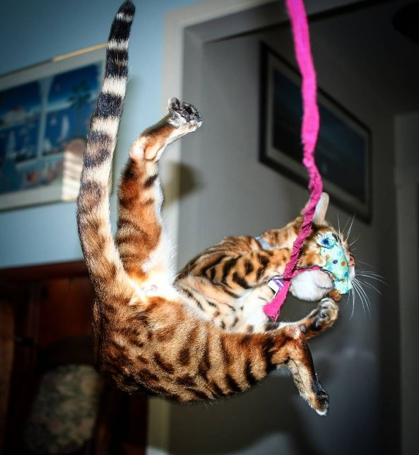 Catching the Cat Toy
