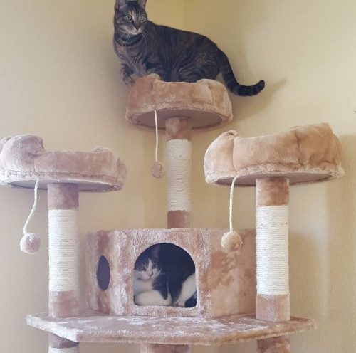 Cat trees are great cat toys
