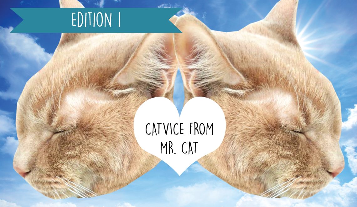 Meow from Mr. Cat: Our Foster Kitty's Catvice Column
