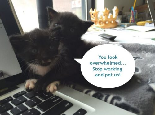 Jamie and Cersei, Meow - ing Catvice!