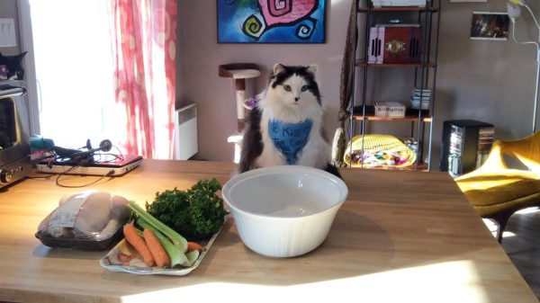 Kiss the Cook, worn by kitty chef oreo the cat