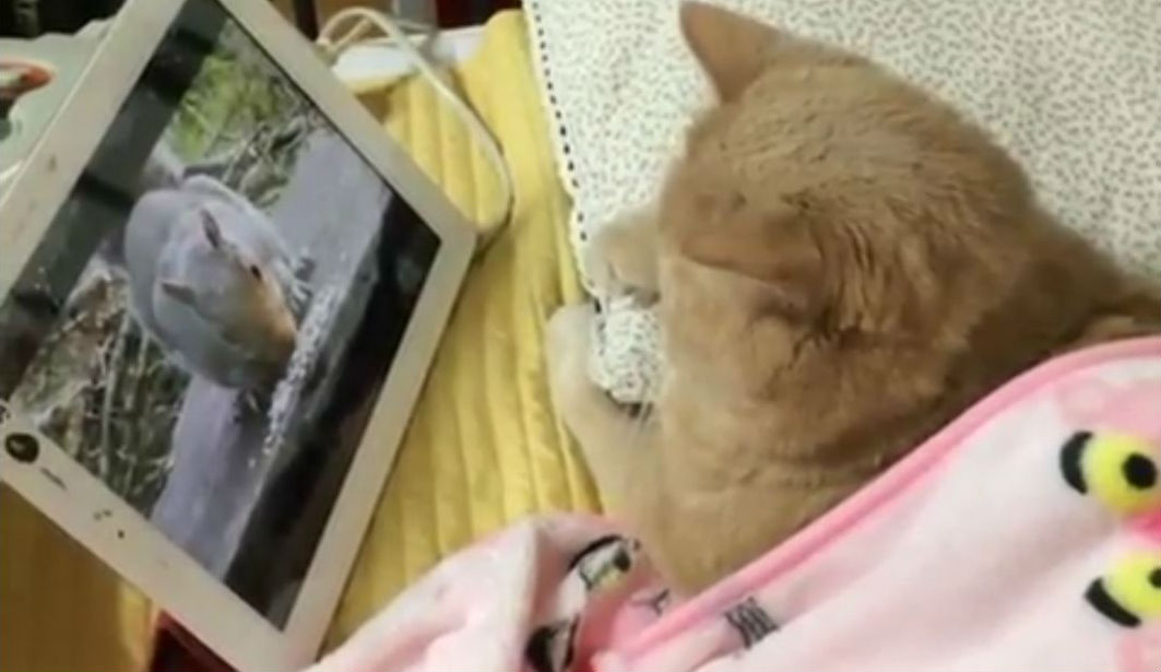 "Cat Video: ""We Love Reality TV, Just Like You, Humans!"""