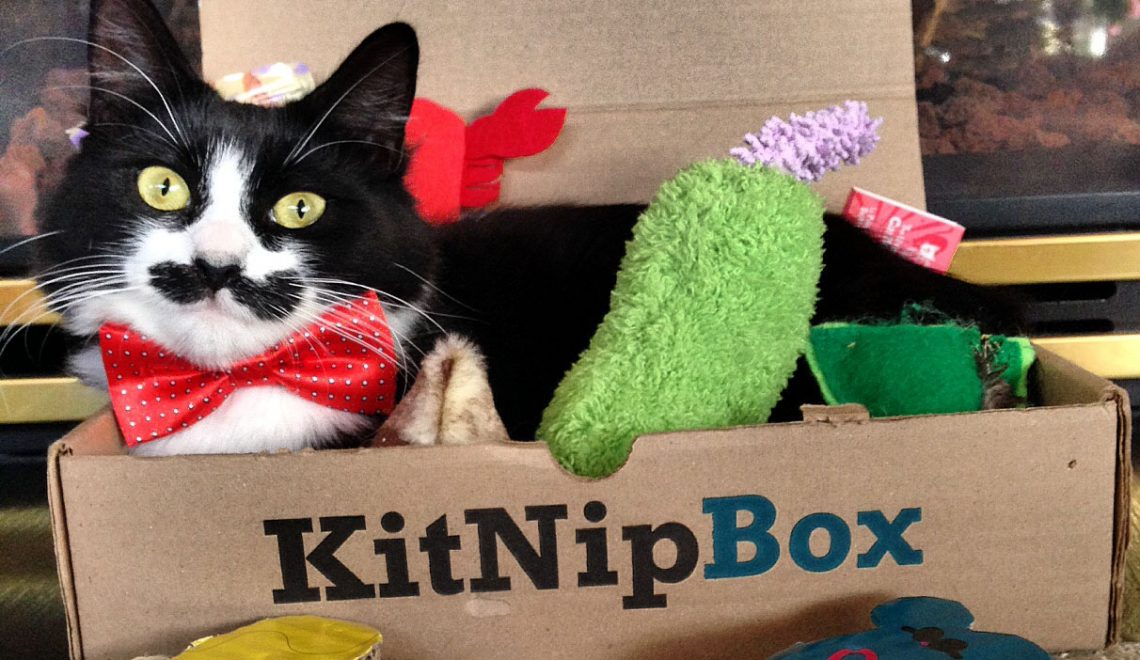 "Proud to Announce That KitNipBox Won the CUBE Award for ""Best Pet Subscription Box!"""