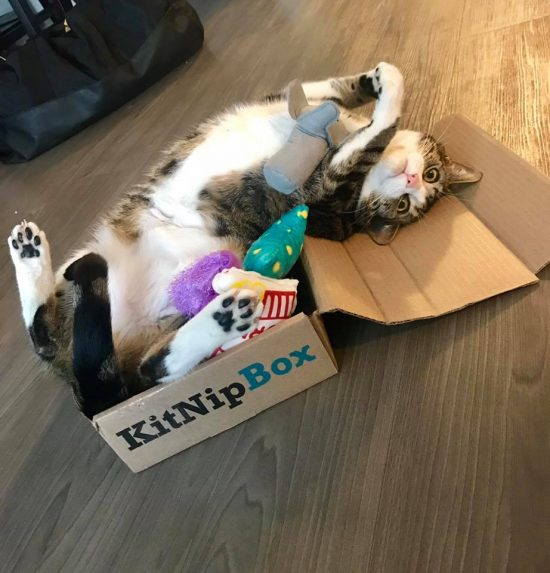 Snickers going bonkers for his KitNipBox!