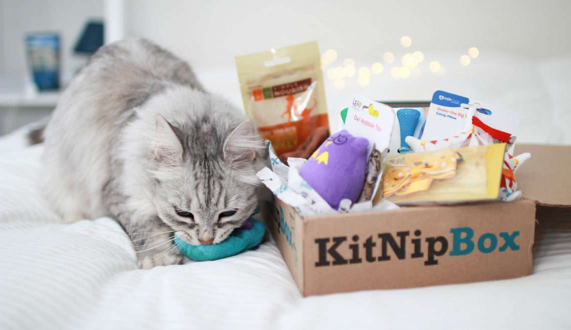 kitnipbox best pet subscription box