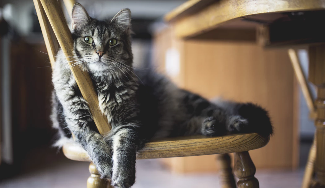 8 Pawfect Ways To Make Your Apartment Way More Fun For Kitty
