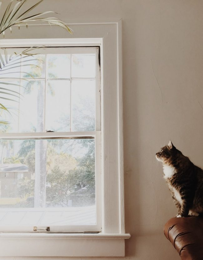 Windows provide cats with mental stimulation