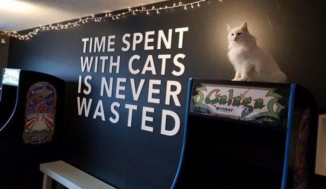 Chicago S First Ever Cat Cafe And Arcade Catcade