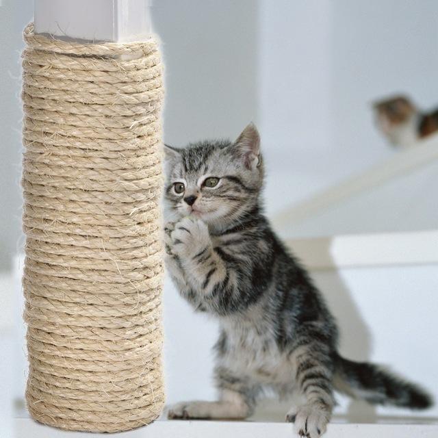 kititen Jak NIE bawić się z kotem?