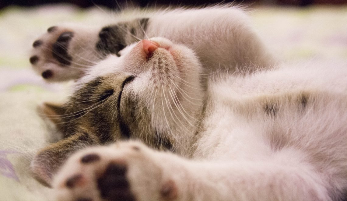 New Kitten Checklist: An Easy Guide to Preparing For Your New Furry Buddy!