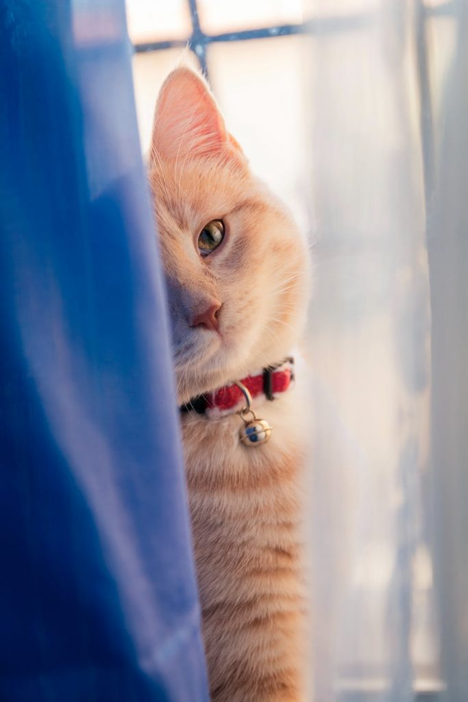 How to Introduce a New Cat to a Home With An Existing One