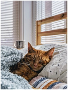 Cat sleepng in bed