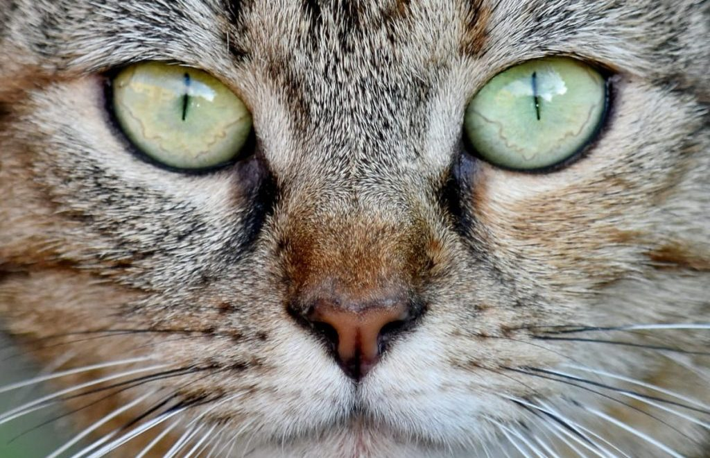 10 Things You Never Knew About Whiskers