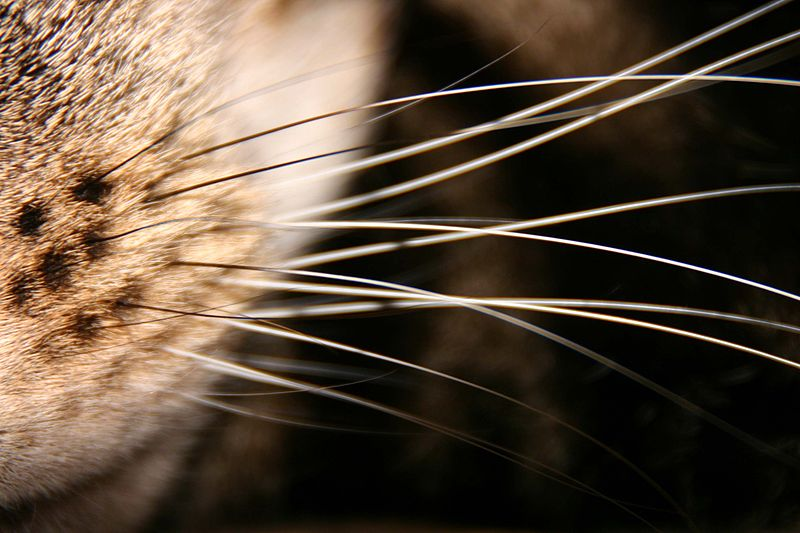 Close-up look at a kitty's whiskers