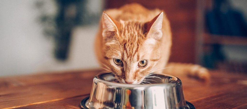 Ginger cat eating out of metal bowl