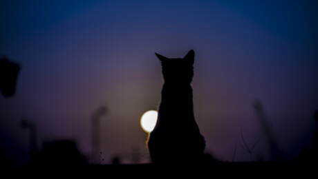 Silhouette of a cat at night against the moon