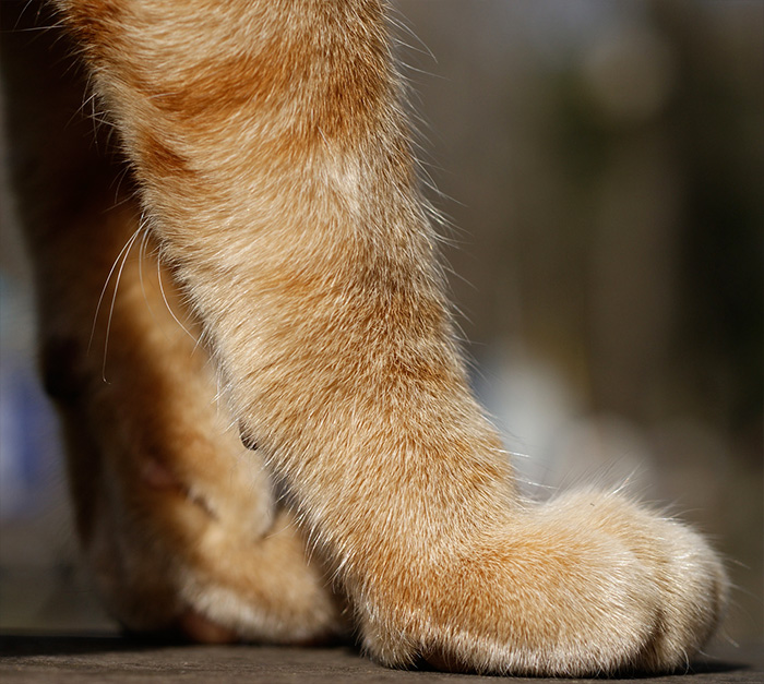Whiskers on a cat's legs