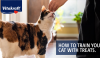 Want to teach your cat a few tricks? Or maybe just curb their bad behavior? Use treats in your training to reward the desired behavior!