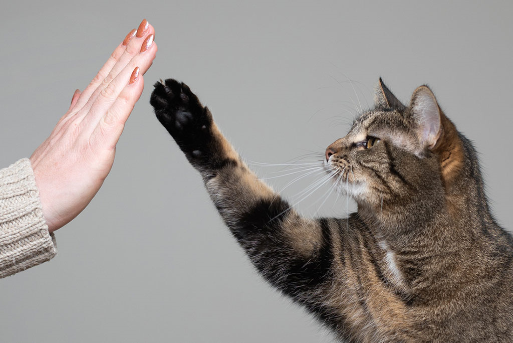 image of cat giving a high-five to a woman's hand