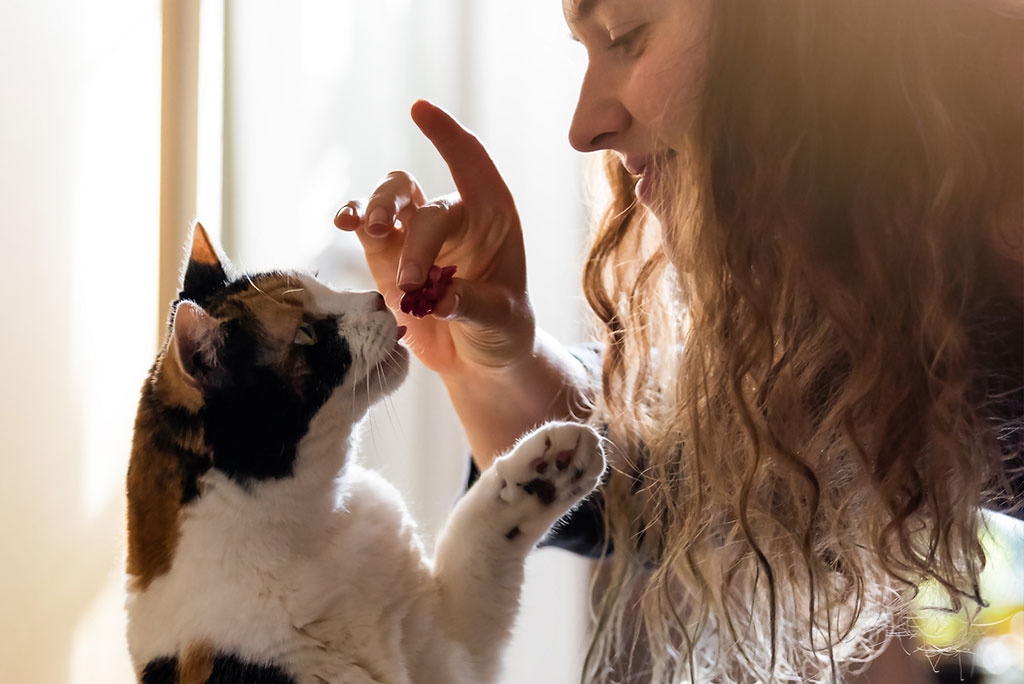 image of a smiling woman feeding a happy cat a Vitakraft treat
