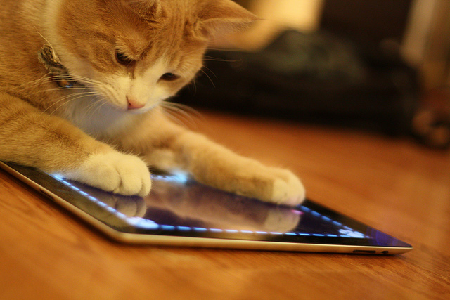 Cat plays an app on a tablet device