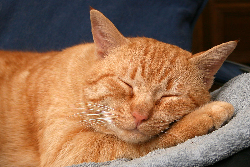 Ginger cat snoozes on a cozy blanket