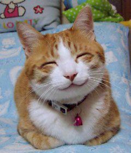 A Happy kitty smiling in contentment