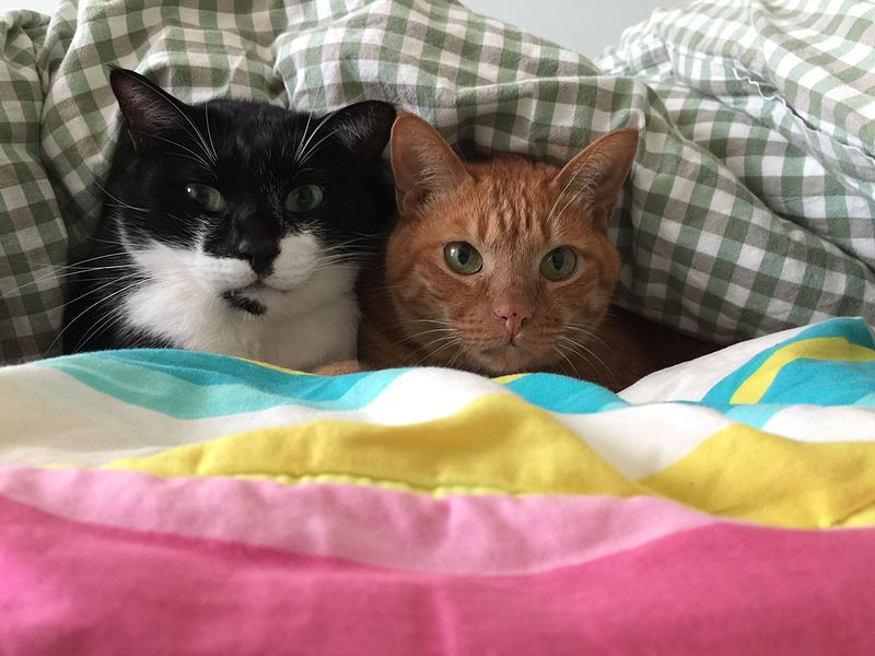 Two cats besties snuggle together
