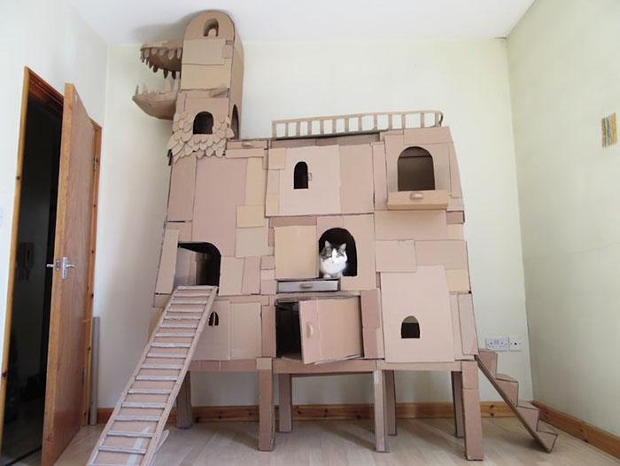 Kitty enjoying elaborate cardboard structure