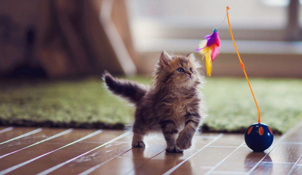 Sweet kitten enjoys playtime