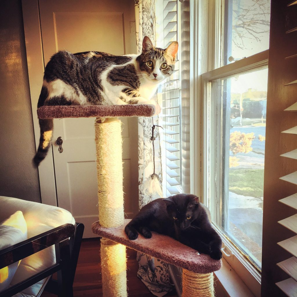 Two cats lounge on a cat tree tower