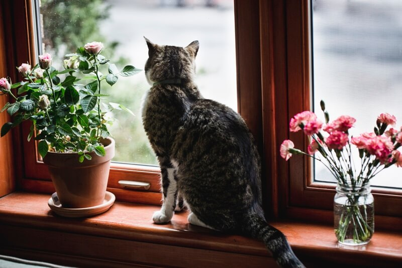 Kitty looks out the window