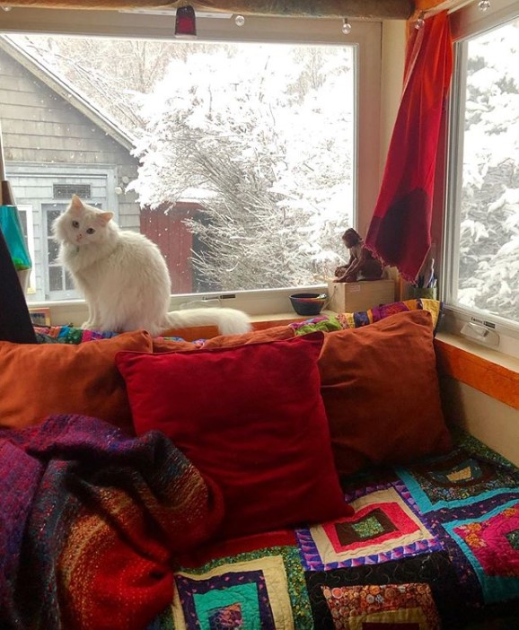 A white cat in a tiny house