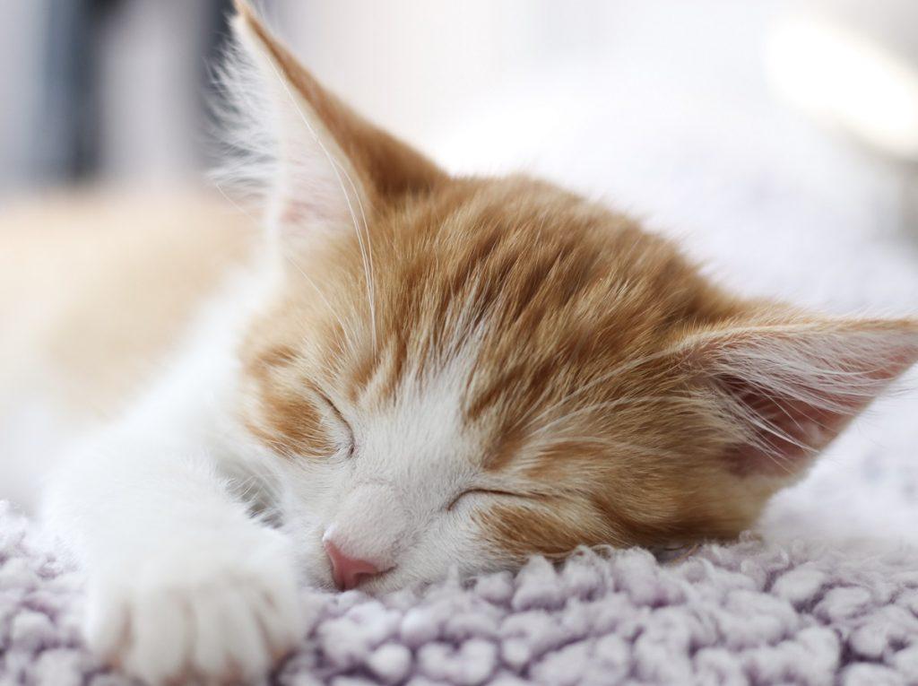 A secure, sleeping kitten